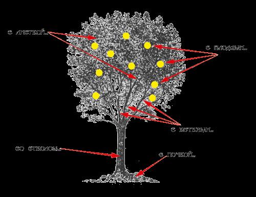 Tree-blason